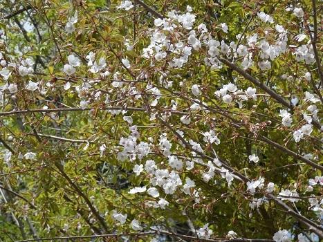 「きれぎれの風彩 新潟県:松之山「キョロロ」の森」