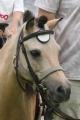 190721 ポニー・サラブレッド乗馬体験-03