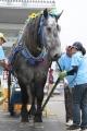 190722 ばんえい十勝in川崎 ばん馬とのふれあい-01