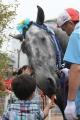 190722 ばんえい十勝in川崎 ばん馬とのふれあい-02