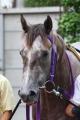 130705 キョウエイアドニス 新馬戦優勝-02
