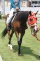 190804 ポニー・サラブレッド乗馬体験-01