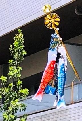7 鯉のぼり