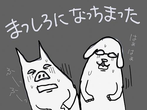 犬豚まっしろ
