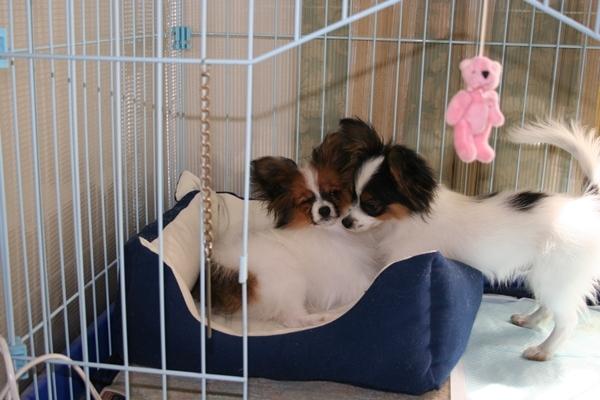 犬達5月3日 ブログサイズIMG_1596