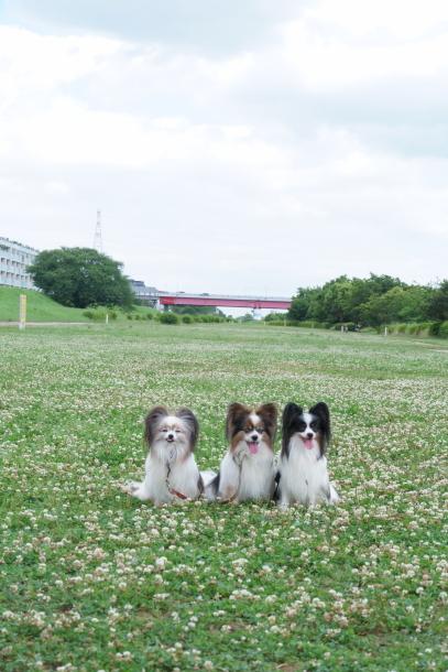 二子玉川公園アジサイ ふるさと公園00077752