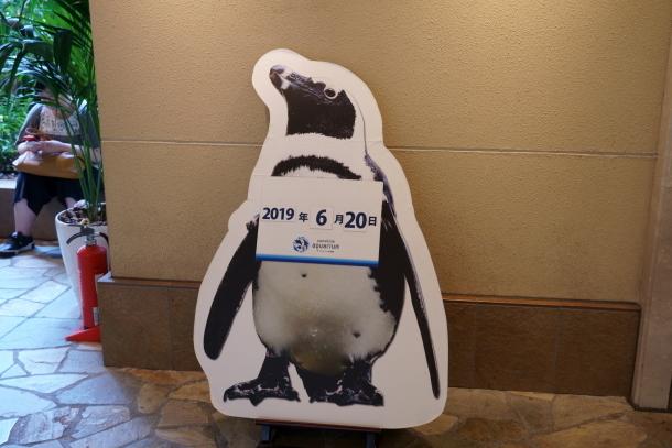 サンシャイン水族館00078530