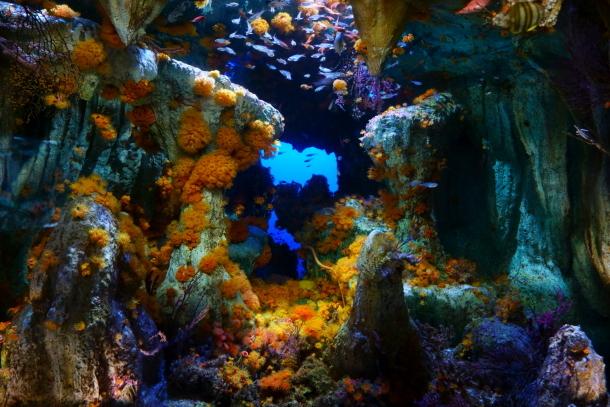 サンシャイン水族館00078538