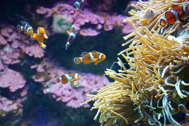 サンシャイン水族館00078557