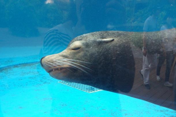 サンシャイン水族館00078572
