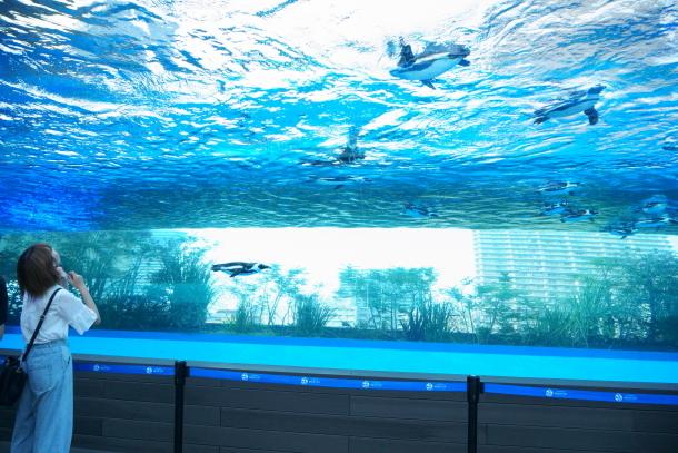 サンシャイン水族館00078620
