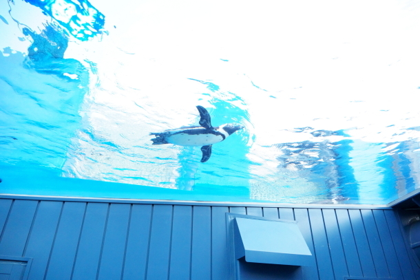 サンシャイン水族館00078587