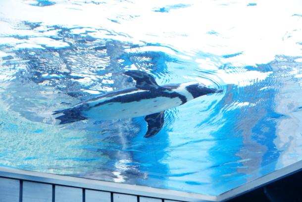 サンシャイン水族館00078588