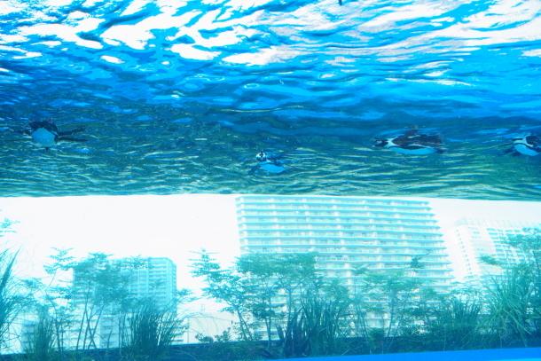 サンシャイン水族館00078601