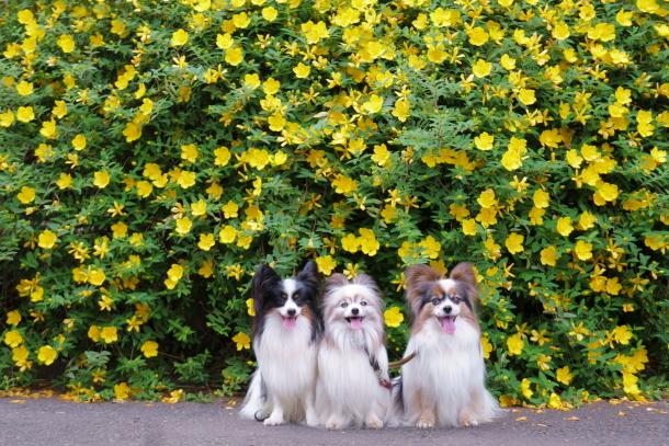薬師池公園の花しょうぶアジサイ00078790