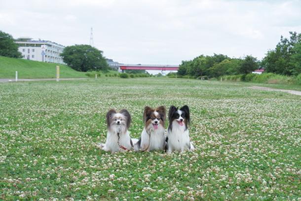 二子玉川公園アジサイ ふるさと公園00077751