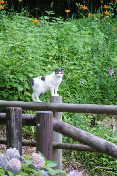 蓮ぴょんと東高根森林公園00078721