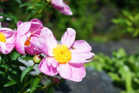 rosaberry_5.jpg