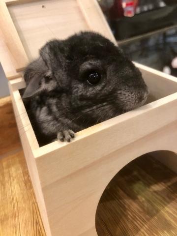 もなか ブログ 小動物2