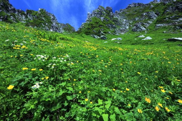 お花畑と岩峰