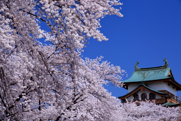 青空に映える天守閣と桜