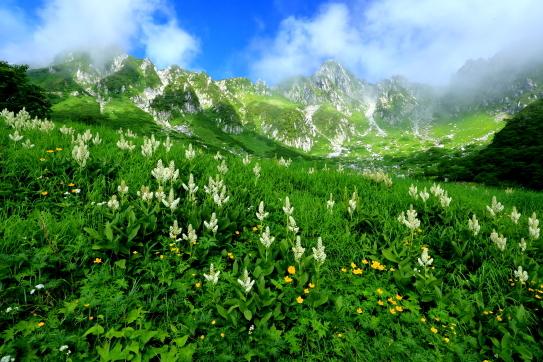 お花畑と霞む宝剣岳