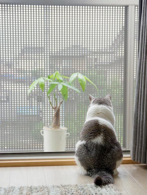 こもる猫を訪問する