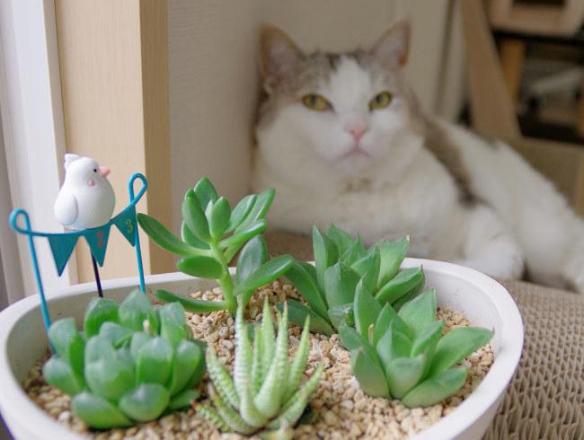今年もツバメを見つめる猫