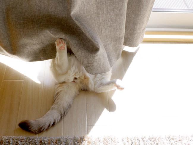 頭隠して尻隠さずな猫