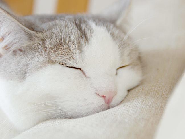 猫の枕を観察する
