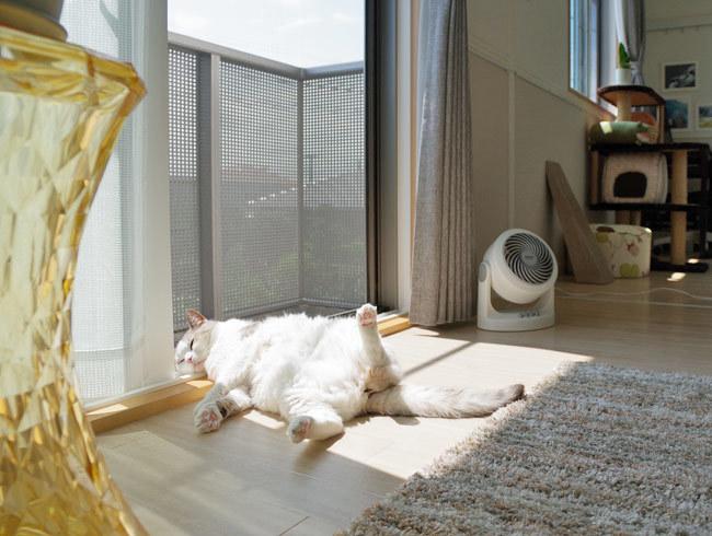 猫様はお暑いのがお好き