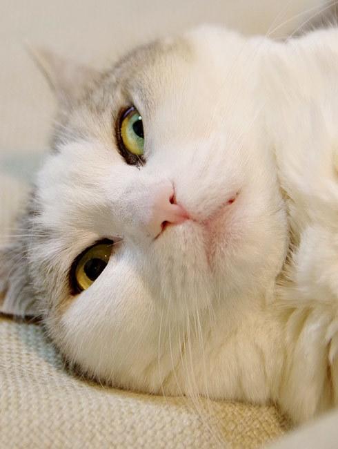 隣の席の猫の顔