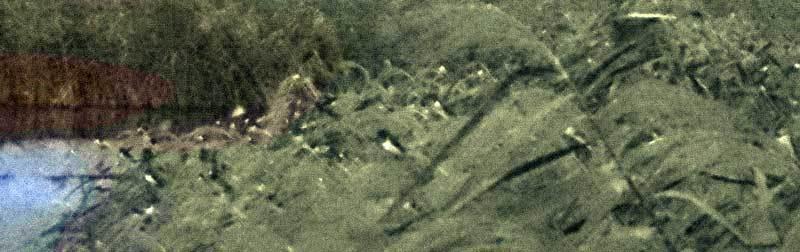 ツバメの朝立ち8月13日