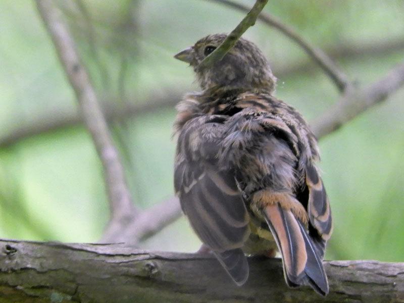 不明若鳥2