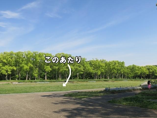 IMG_163320190512.jpg