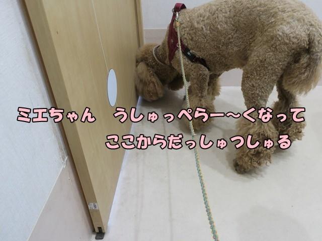 XEKU500720190530.jpg