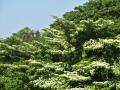 水木の山肌