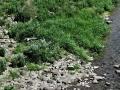ウミネコ飛ぶ川岸