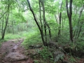 森の十字路