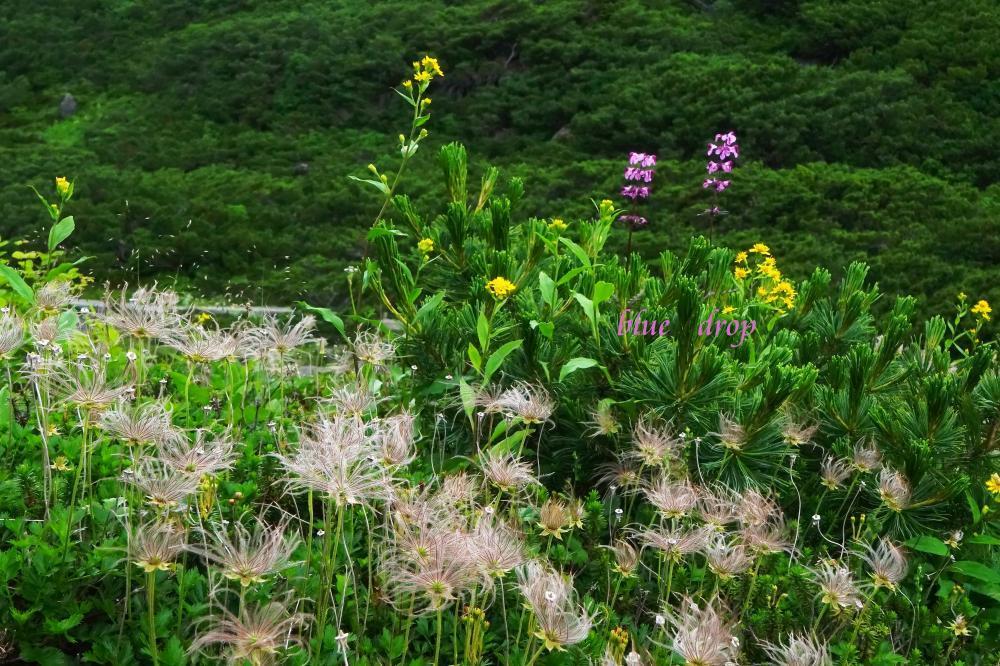 夏の花畑*