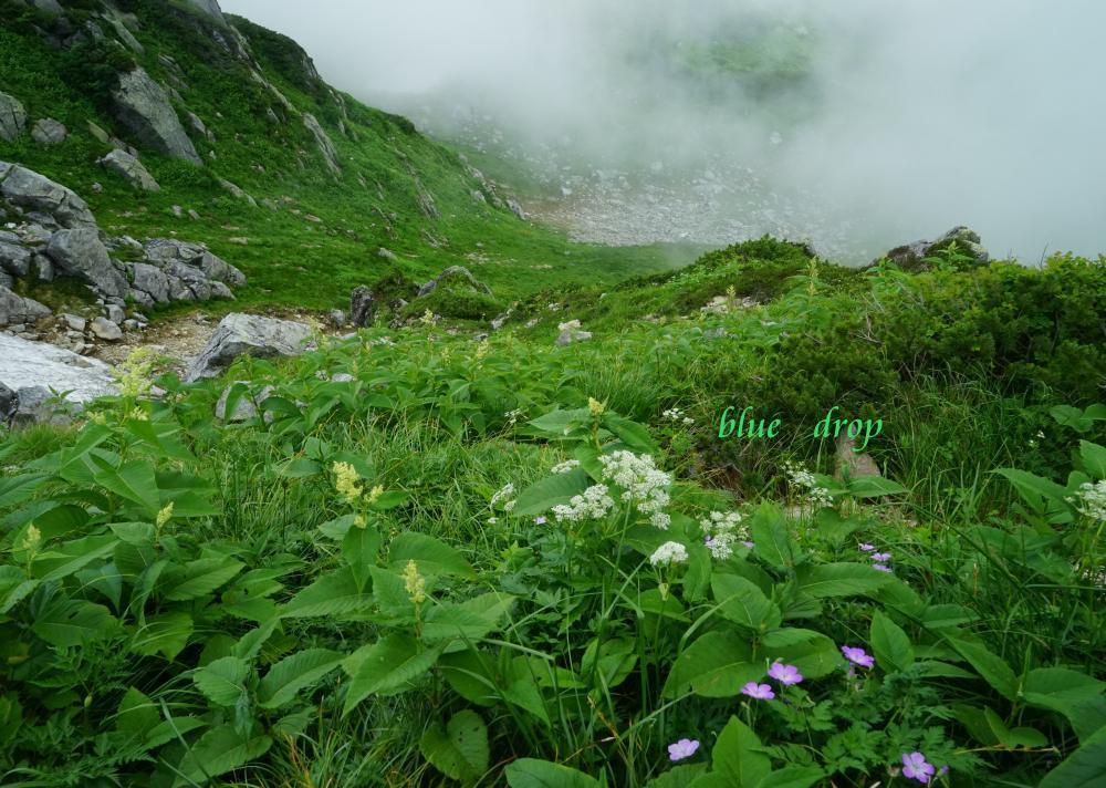 霧の流れる花畑*