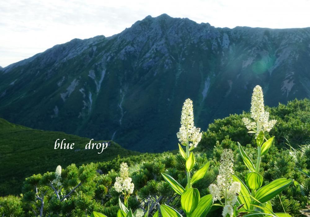 花と水晶岳*
