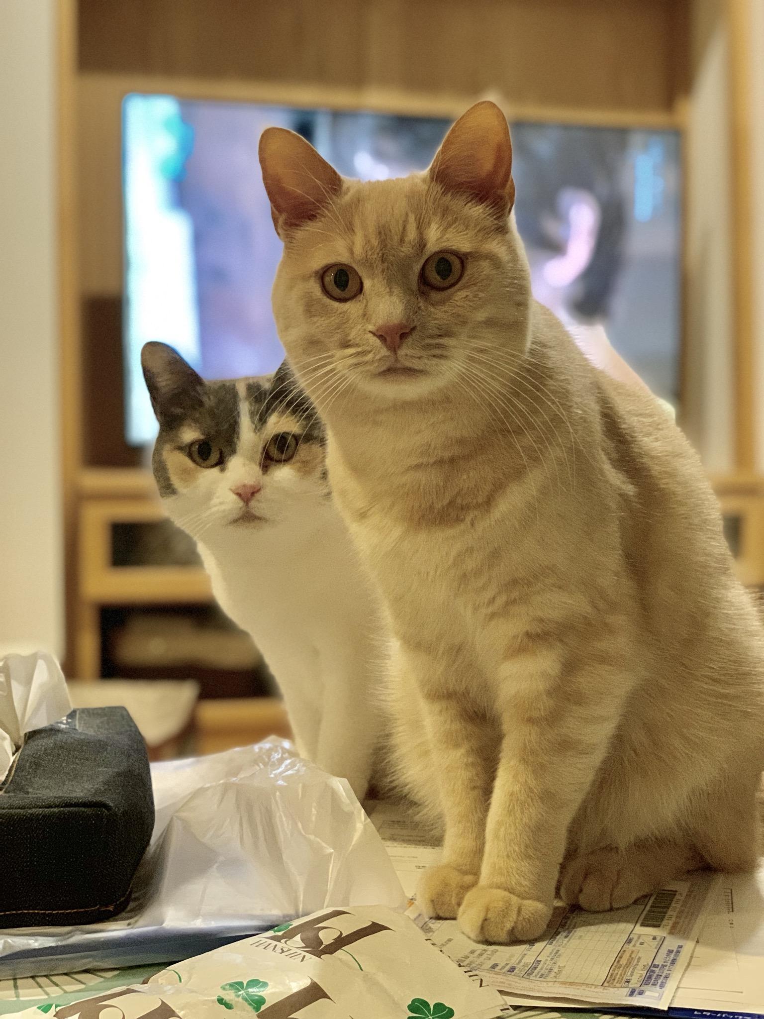 猫フェスありがとうございました‼︎
