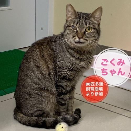 gokumi3_20190519001727c05.jpg