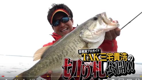 琵琶湖 シャッドテール