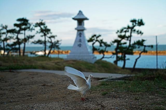 190616住吉神社5