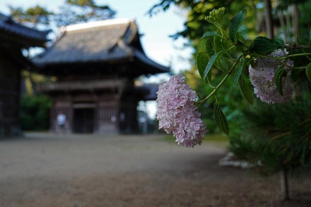 190616住吉神社8