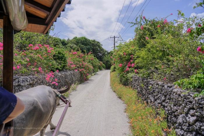 竹富島2731