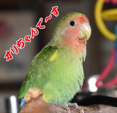 5_オリちゃん