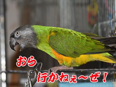 10_いかねえ